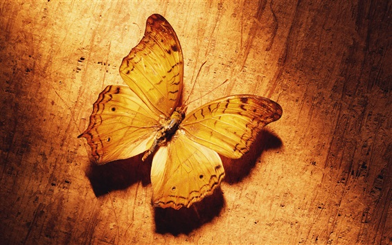 Papéis de Parede Borboleta, cor do ouro