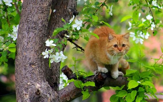 Fondos de pantalla Gato en el árbol, flores, primavera