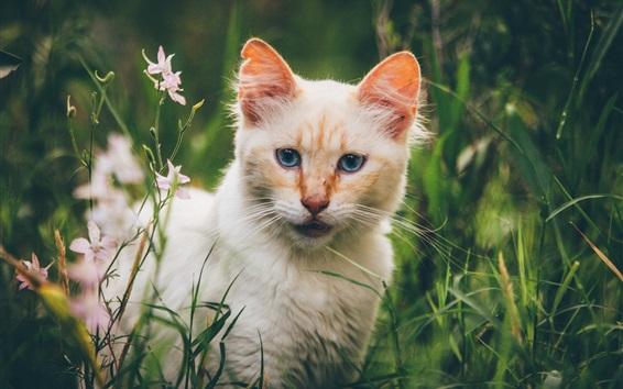 Обои Кошачий взгляд, вид спереди, цветы