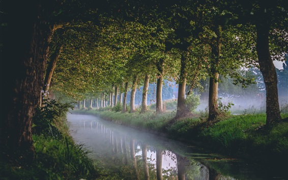 Fond d'écran Chaîne, rivière, arbres, brouillard, matin
