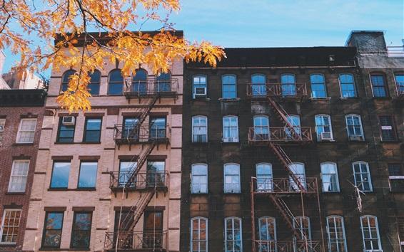 Wallpaper City buildings, windows, twigs, autumn