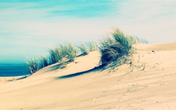 Papéis de Parede Costa, praia, areia, grama, vento