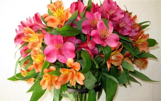 Papéis de Parede Alstroemeria colorida, pequenas flores de lírio