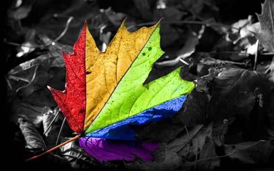 Обои Цветной кленовый лист, цвета радуги
