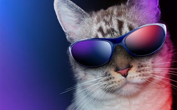 Papéis de Parede Gato fresco, óculos de sol, humor