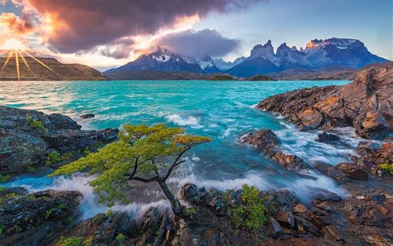 Wallpaper Cuernos del Paine, Patagonia, Chile, Lake Pehoe, mountains, tree, sunrise