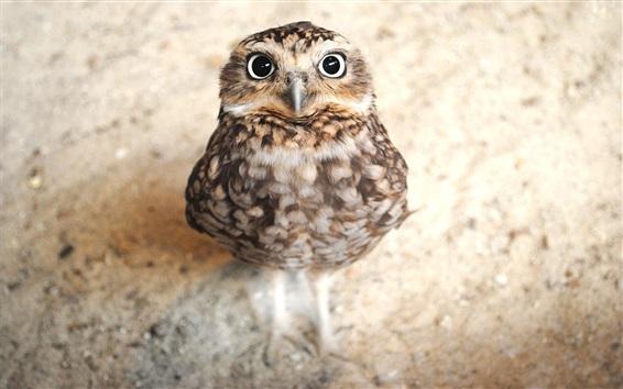 Wallpaper Cute owl look at you
