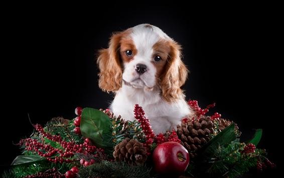 Papéis de Parede Filhote de cachorro bonito, maçã, bagas, fundo preto
