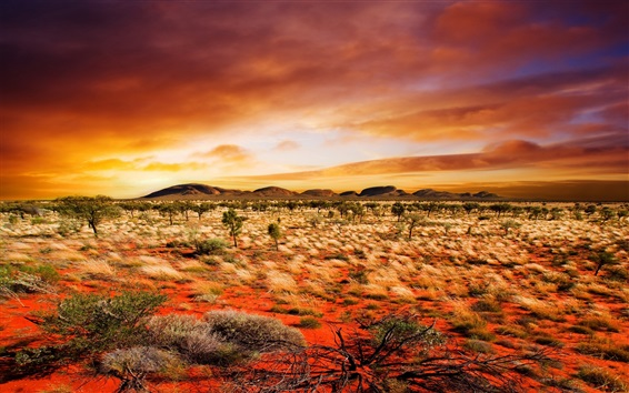 Wallpaper Desert, bushes, grass, clouds, sunset