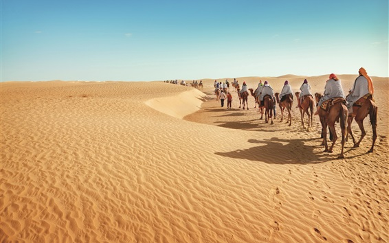 Обои Пустыня, верблюды, туризм