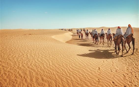 Wallpaper Desert, camels, tourism