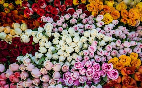 Wallpaper Different colors roses, pink, white, yellow, orange, red