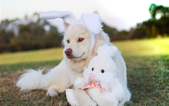 Wallpaper Dog and rabbit toy, funny animals