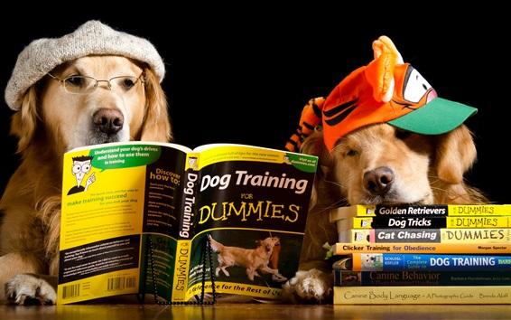 Papéis de Parede Cão, leitura, livro, engraçado, animais