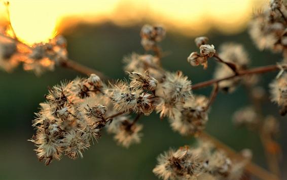 Papéis de Parede Ramos de flores secas