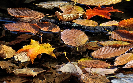 Wallpaper Dry leaves float on water, autumn