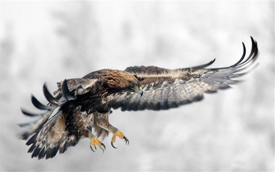 Papéis de Parede Eagle vôo, asas, pássaro
