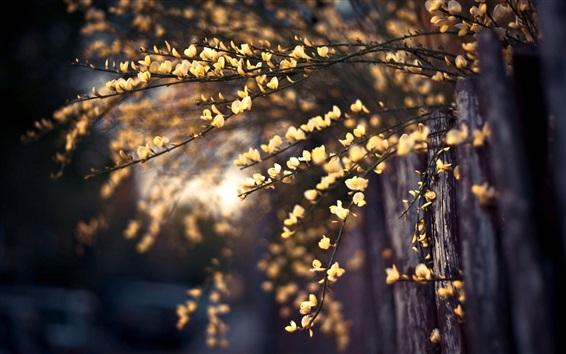 Wallpaper Fence, yellow flowers, twigs, bokeh