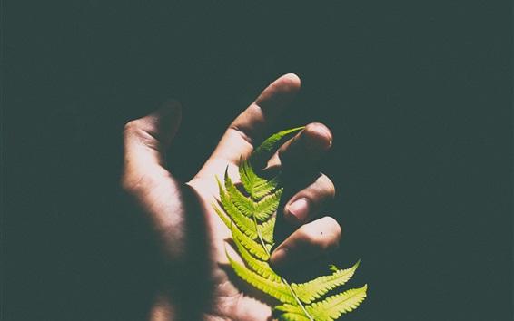 Обои Папоротниковый лист в руке