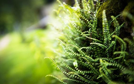 Wallpaper Fern leaves, bokeh, green
