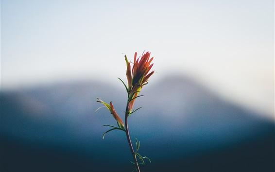 Wallpaper Flower close-up, stem, bokeh