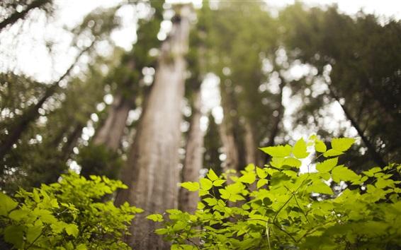 Обои Лес, ниже, зеленые листья, ветки