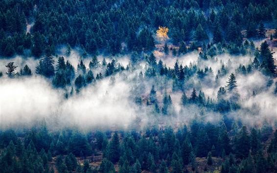 Wallpaper Forest, trees, fog, morning