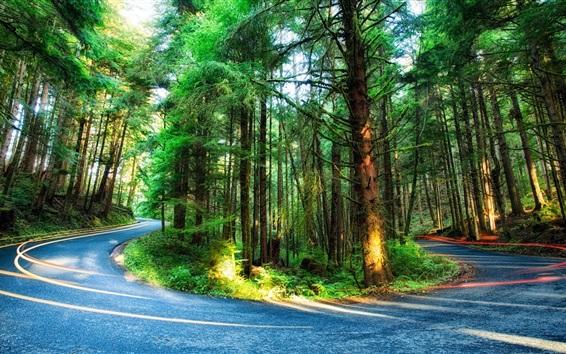 Wallpaper Forest, trees, road, light, Oregon, USA