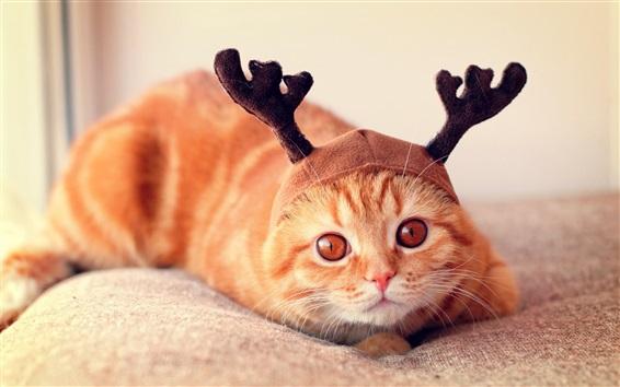 Papéis de Parede Gato engraçado, chapéu, chifres