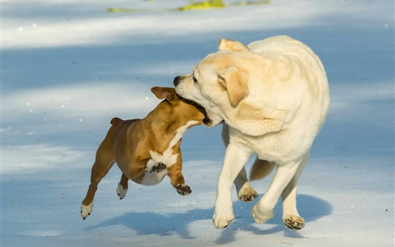 Wallpaper Funny picture, two dogs