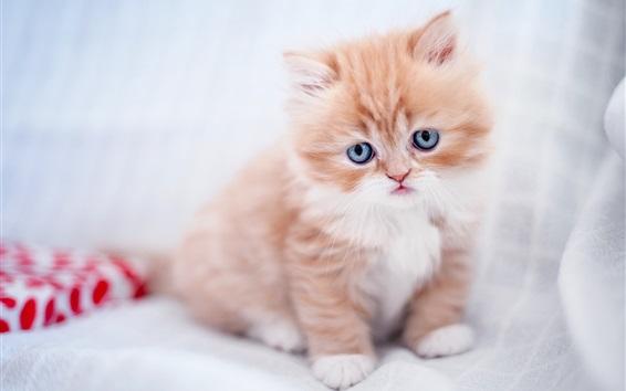 Fondos de pantalla Gatito peludo, bebé del gato