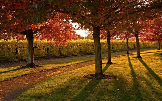 Fond d'écran Jardin, sentier, arbres, pelouse, automne, soleil