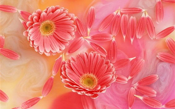 Wallpaper Gerbera pink petals, tenderness