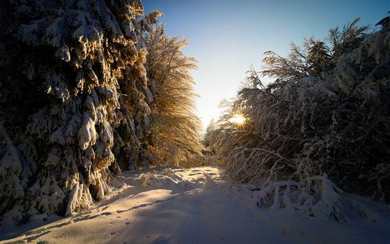 Wallpaper Germany, winter, thick snow, trees, twigs, sun