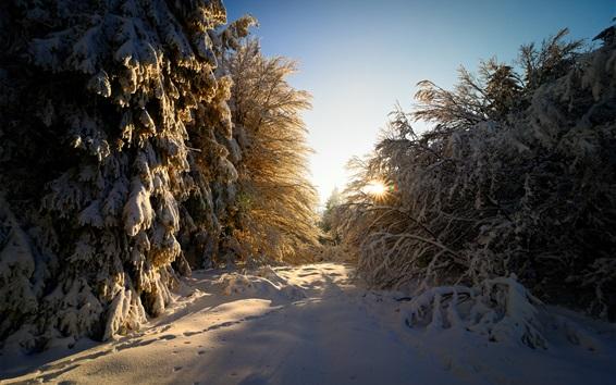 Fondos de pantalla Alemania, invierno, nieve gruesa, árboles, ramitas, sol