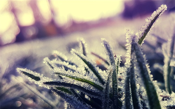 Wallpaper Grass, frost, ice crystals, cold