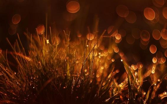 桌布 草,眩光,散景