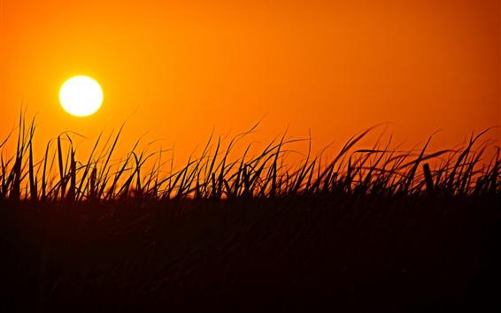 Fondos de pantalla Hierba, silueta, puesta de sol, cielo naranja
