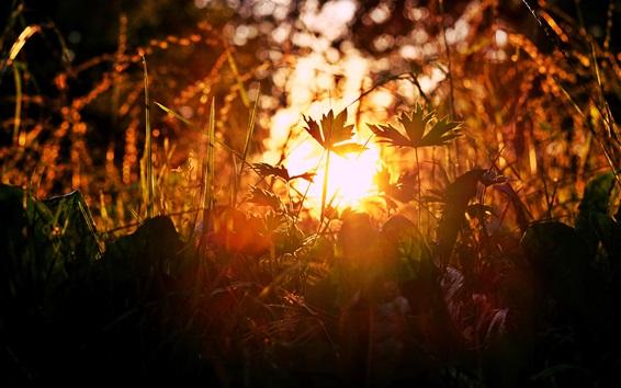 Fond d'écran Herbe, soleil, éblouissement, été