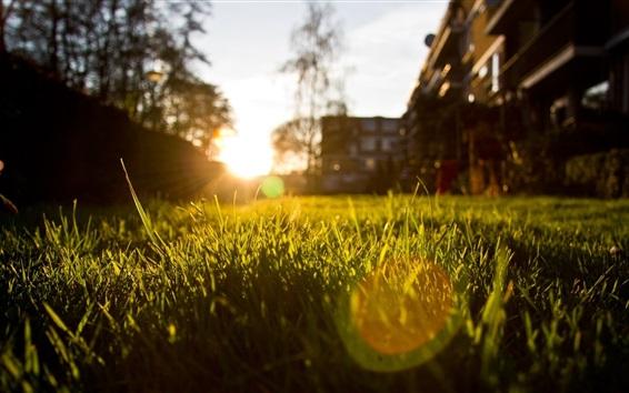 Wallpaper Grass, sun rays, glare