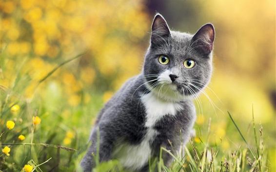 桌布 草地上的灰貓看著你
