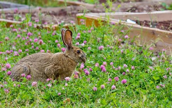 Wallpaper Gray rabbit, grass, flowers