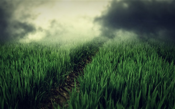Wallpaper Green fields, fog