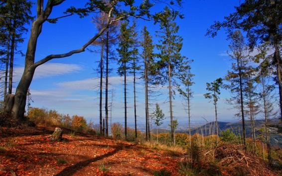 Обои Высокие деревья, горы, природа