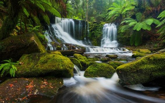 Wallpaper Horseshoe Falls, creek, plants, moss