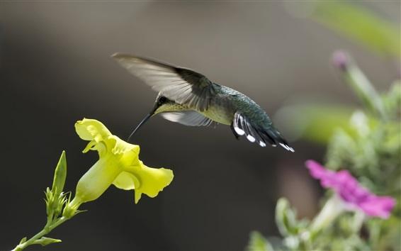 Papéis de Parede Colibris, amarela, flor