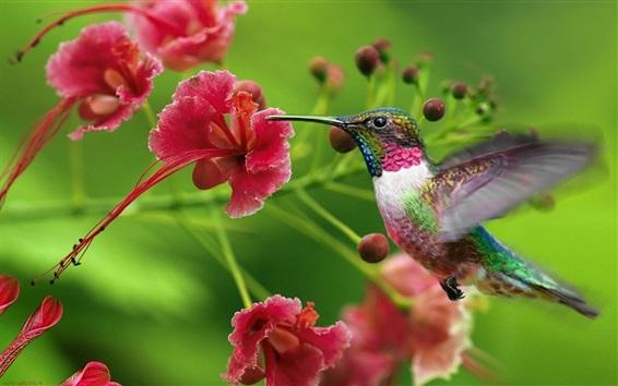 Papéis de Parede Colibris, vermelho, flores