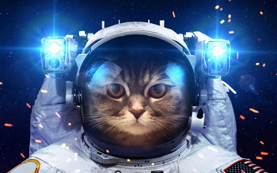 Wallpaper Humor, cat as a astronaut, space, light