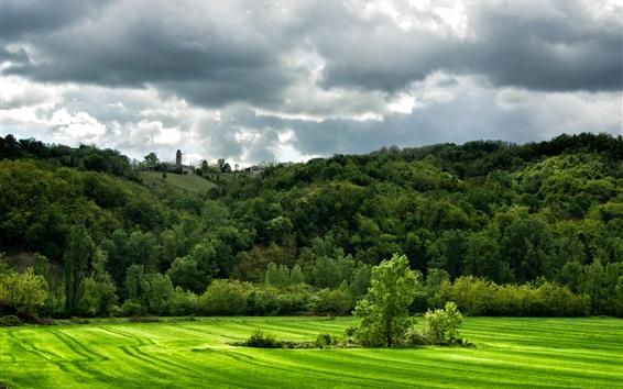 Обои Италия, зеленые поля, холмы, трава, поля, деревья