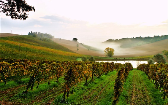 Обои Италия, виноградник, пруд, склон, туман
